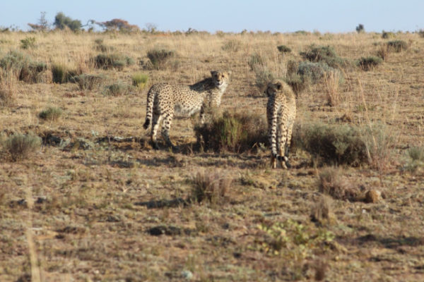 clifftop-exclusive-safari-hideaway-august-news-9
